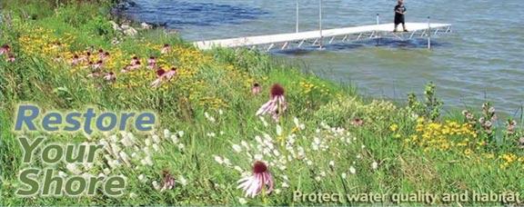 Native Shoreline Restoration